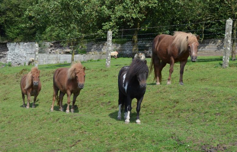 Chambre d 39 h te 1 xhawirs horses farm chambre d h tes for Chambre d hote a la ferme